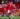 Số 7 một thời của Man Utd đã trở lại